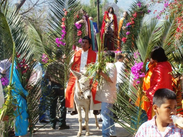 palm-sunday-message-donkey_1363605492