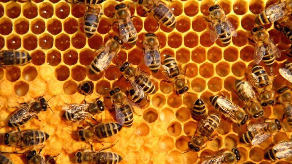 honeycomb_wide-2c4f64a3a0de4582c1f62c306d23ef63da2e2d8c-s6-c30